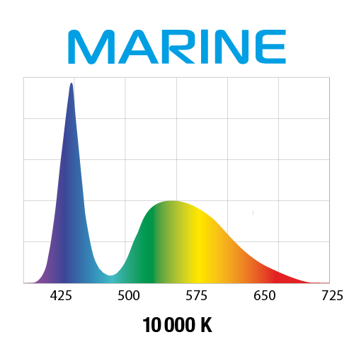 wykres marine